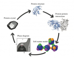 Diagram showing proteins interacting, turning into soft matter, and then into a protein crystal